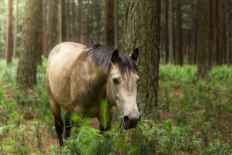 This Is Why Your Horse Is Eating Bark Off Trees Equestrian Space